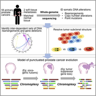 Complexities of Prostate Cancer gene changes